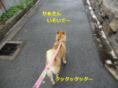 029_20110512112538.jpg