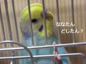 030_20110428165526.jpg