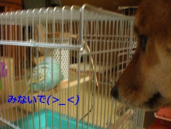 035_20110321130942.jpg