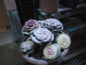 036_20110212091846.jpg