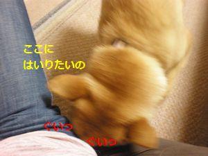 038_20100508152828.jpg