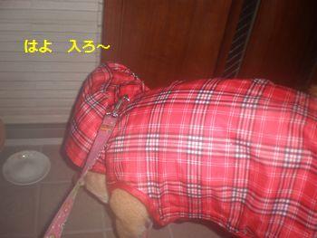 041_20110212091859.jpg