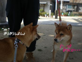 ちょこちゃん2