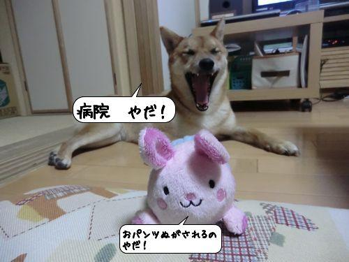 20111019_132016.jpg