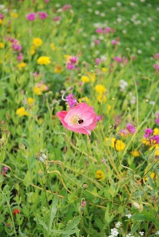 flower13-1.jpg