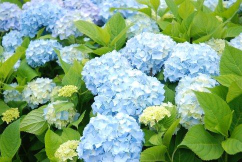 flower13-10.jpg