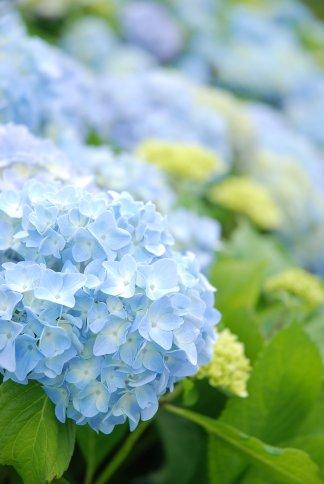 flower13-11.jpg