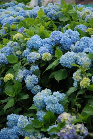 flower13-12.jpg