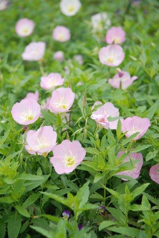 flower13-15.jpg