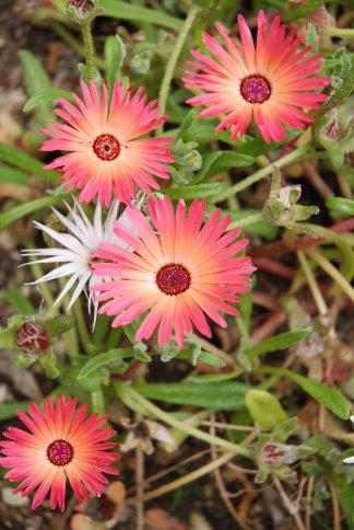 flower13-16.jpg