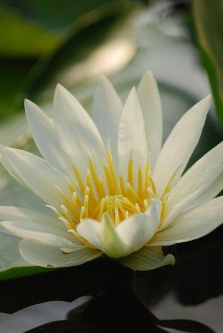 flower13-18.jpg