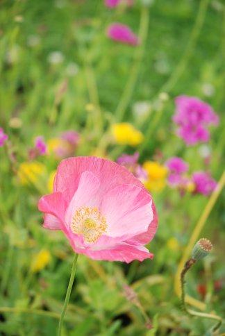 flower13-2.jpg