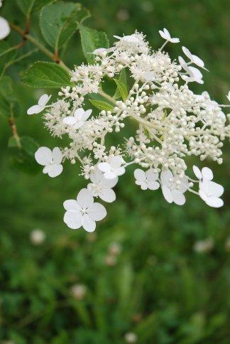 flower13-28.jpg
