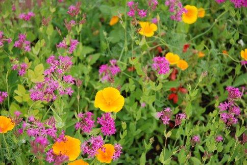 flower13-3.jpg