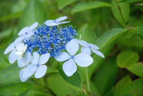 flower13-31.jpg