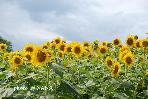 flower13-32.jpg