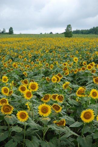 flower13-33.jpg