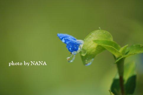 flower13-34.jpg