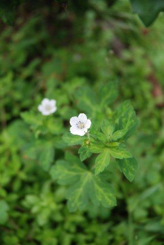 flower13-36.jpg