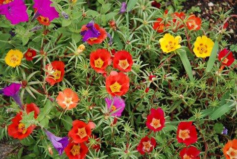flower13-37.jpg