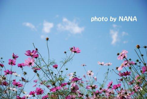 flower13-39.jpg