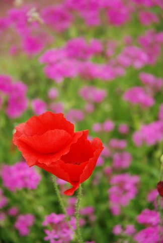 flower13-4.jpg