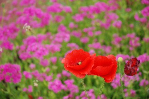 flower13-5.jpg