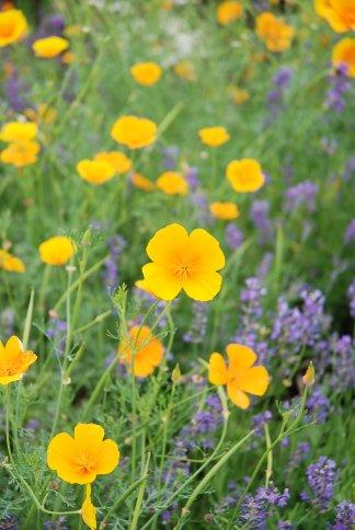 flower13-6.jpg