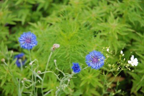 flower13-7.jpg