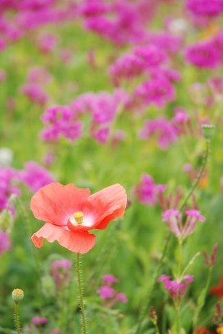 flower13-9.jpg