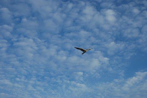 sky13-49.jpg