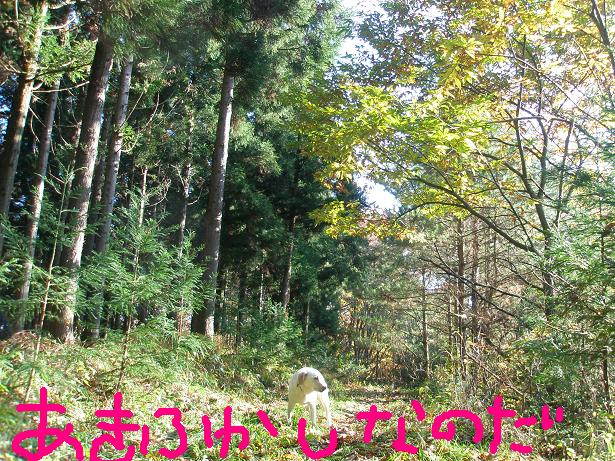 akifukasi1.jpg