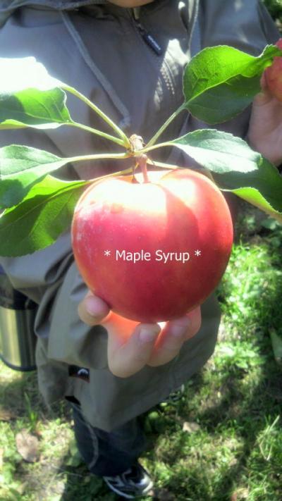 葉付きリンゴ~