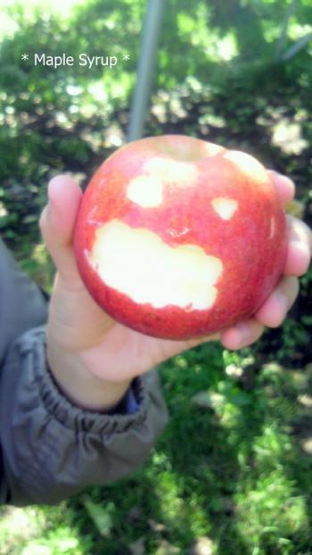 お化けリンゴ~?!