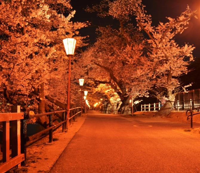 五百淵公園・夜