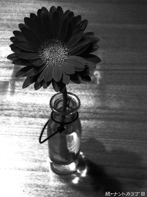 花一輪の優しさ