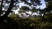 岩倉山から見た甲山