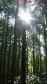 東六甲植林