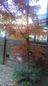 紅葉縁側から12月