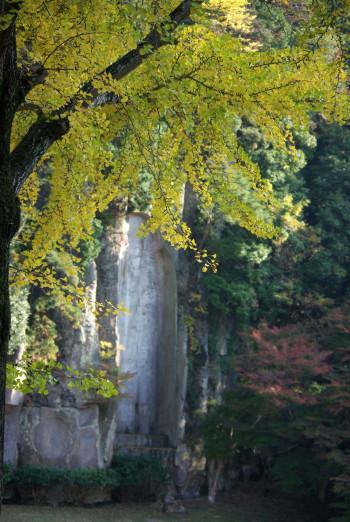 銀杏と摩崖佛