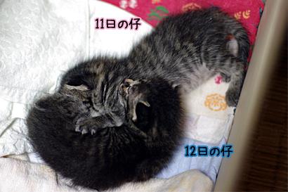 2011-07-15-02.jpg