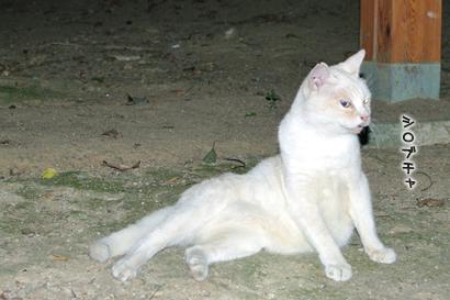 2011-09-01-5.jpg
