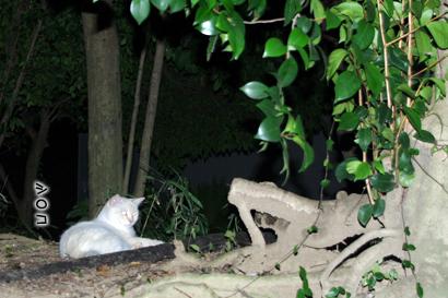 2011-09-01-6.jpg