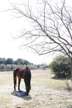 孤独な馬さん