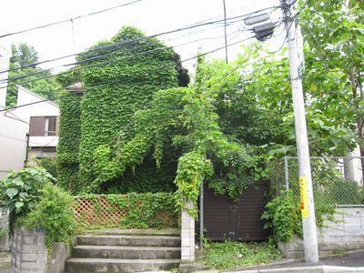 jp10-ivyhouse.jpg