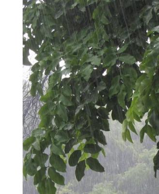 monsoonrain1.jpg