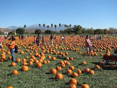 pumpkinpatch-flicker.jpg