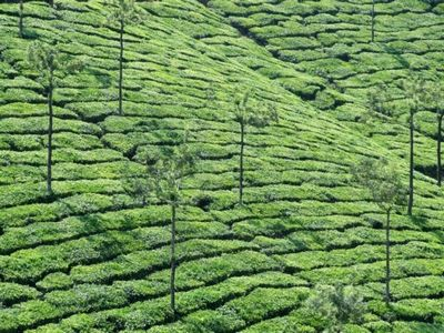 teagarden.jpg