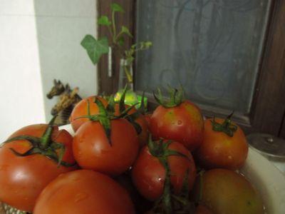 tomato-jul10.jpg