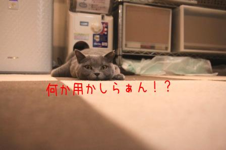 ぶり20110518